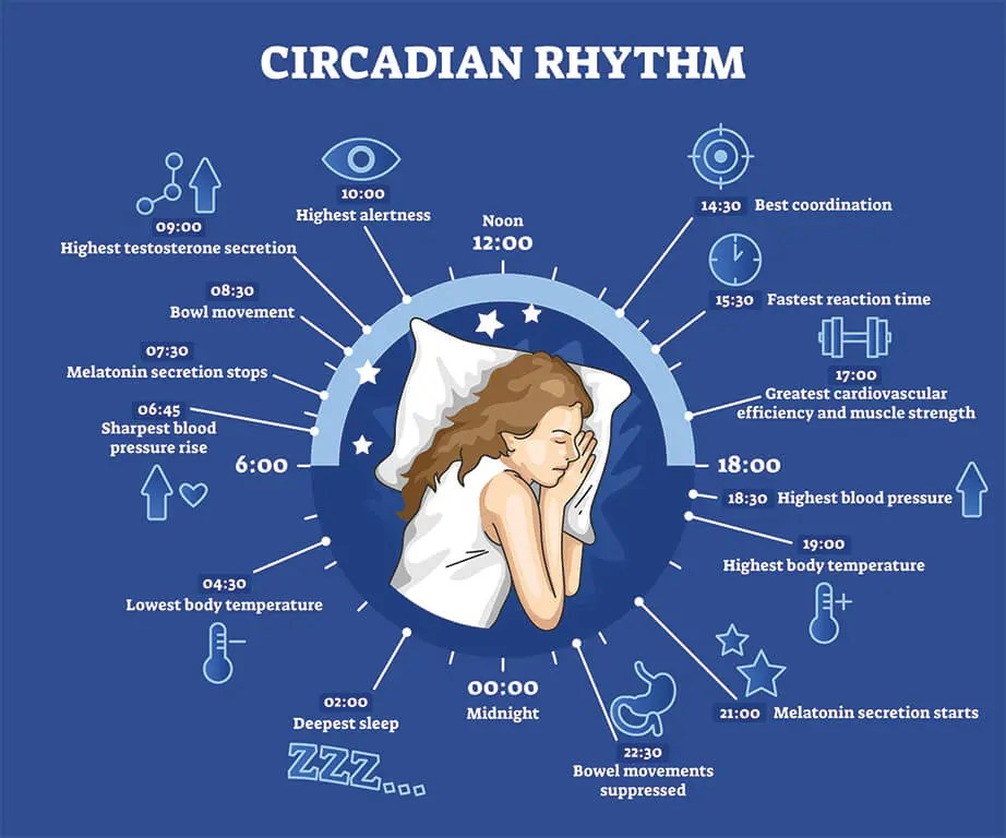 sleep myths - circadian rhythms