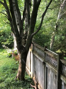 Welcoming wooden fence in a woodland garden