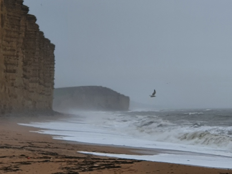 A stormy beach with a wheeling gull, for prompt post this too shall pass.