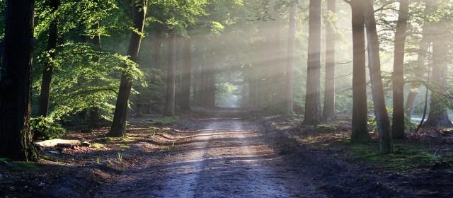Meditação guiada para dominar a ansiedade e construir resiliência