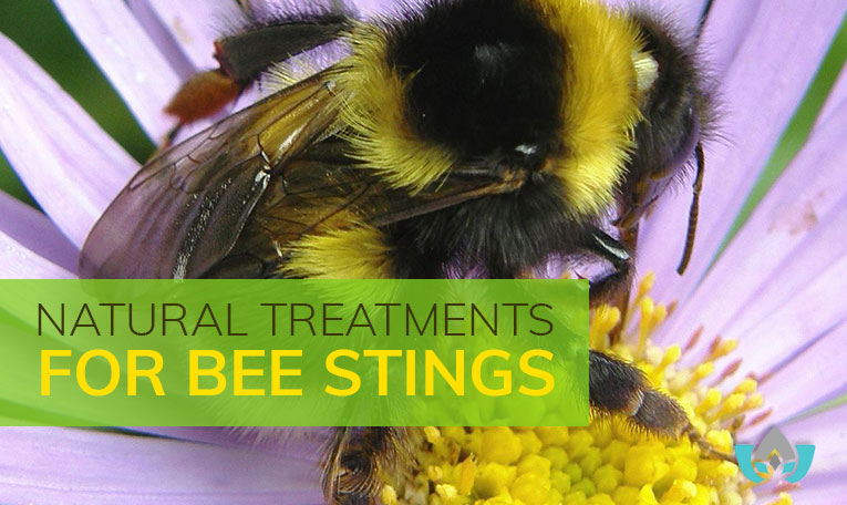 Natural Treatments For Bee Stings   Mindful Healing   Mississauge Naturopathic Doctor
