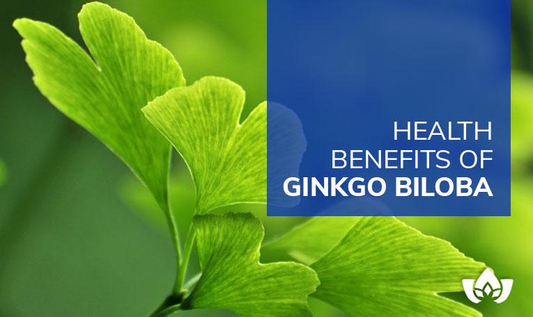 Health Benefits Of Ginkgo Biloba | Mindful Healing | Mississauga Naturopathic Doctor