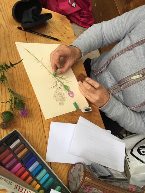 woman sketching thistle