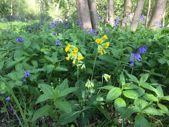 blue and yellow flowers