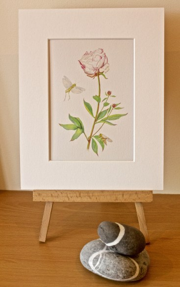 Peony Print; very elegant with 2 grasshoppers