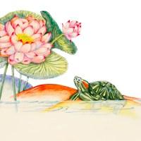 Lotus Plant Drawings: Botanical and Symbolic