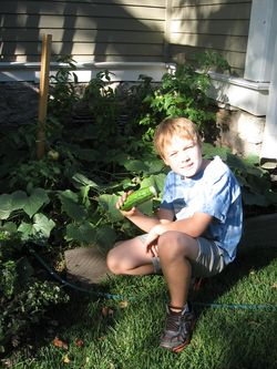 A very special cucumber plant. www.mindfulmomma.com