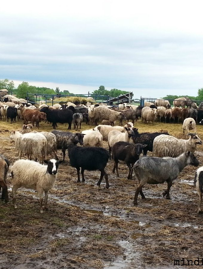 A Day on Star Thrower Farm via mindfulmomma.com