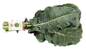 BroccoLeaf