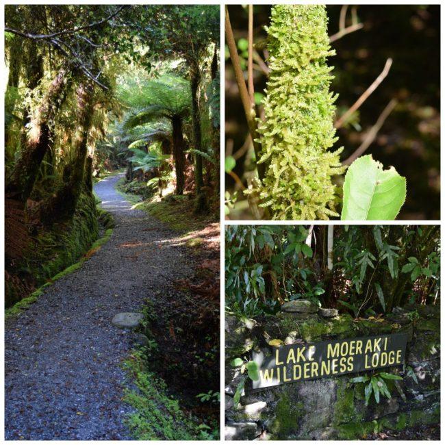 Rainforest in New Zealand // www.mindfulmomma.com