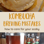 Homemade Kombucha Mistakes and How to Avoid Them