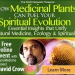 Medicinal Plants and Spiritual Evolution with David Crow