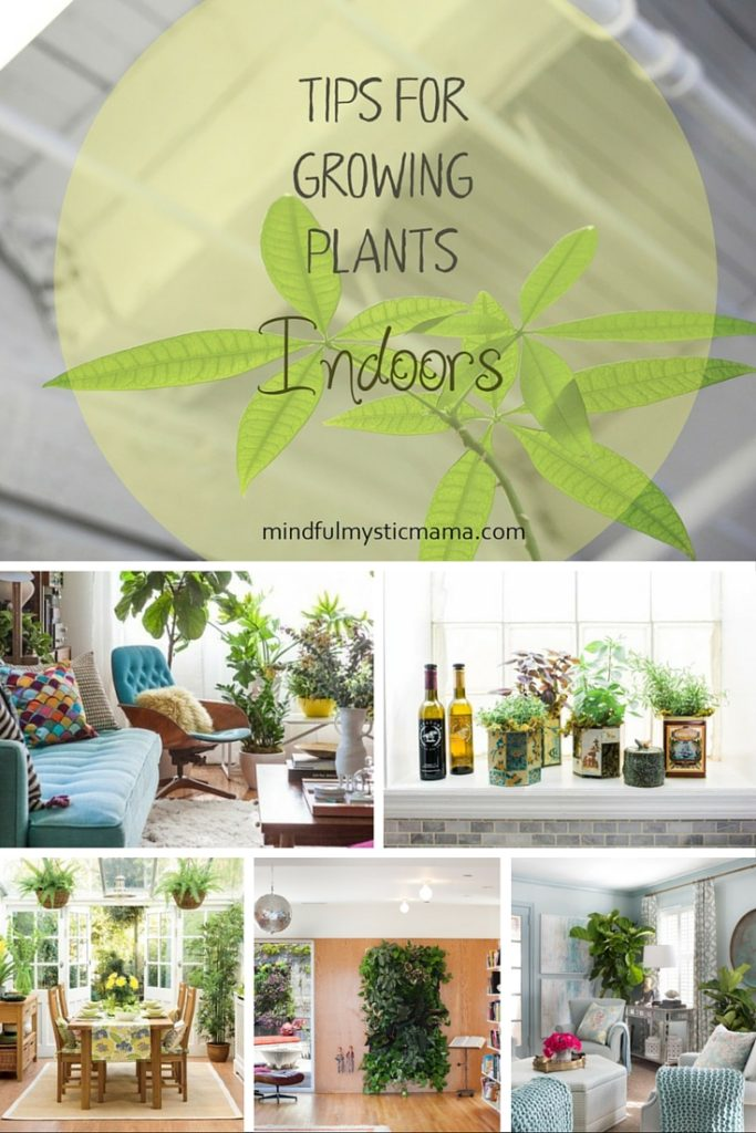 tips for growing plants indoors