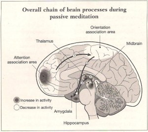 The Chain of Brain Processing and Meditation