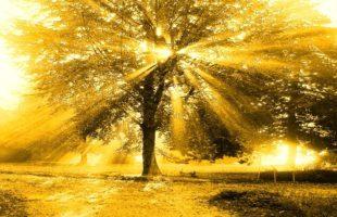 Equanimity and Faith