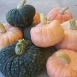Baker Creek pumpkins and squash