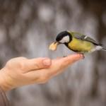 Hvad er compassion – og hvad skal vi bruge det til?