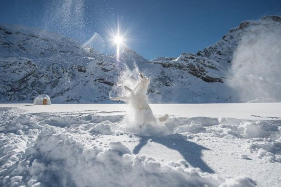 cane sulla neve.jpeg