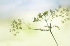 Mindfulness in bedrijven