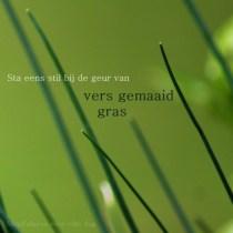 De geur van versgemaaid gras