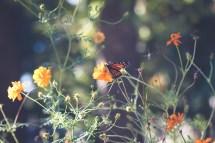Capturing Magic Of Monarch Butterflies - Minding Nest
