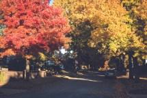 Autumn Bliss - Minding Nest