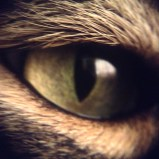 This is a macro close up of my cat Charlie's eye - his eyes have many different colours in them, and I thought that the reflection of the sun in his eye captured that perfectly.