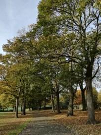 (Landscape) Kirkstall Abbey