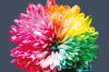 MindOut logo, large rainbow flower, and the words Annual Report 2019-2020