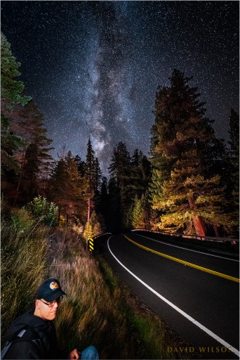 Milky Way over Avenue of the Giants with a person waiting beside the road.