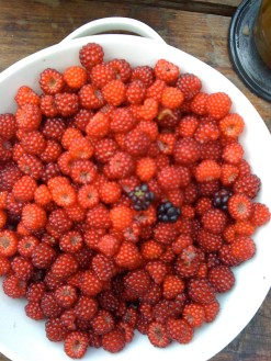 Raspberries from the garden in Ireland; photo by Maggie Melin