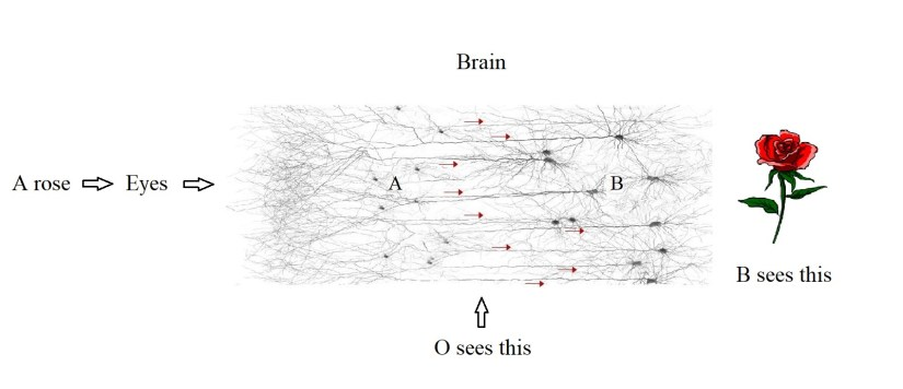 How qualia are signaling patterns