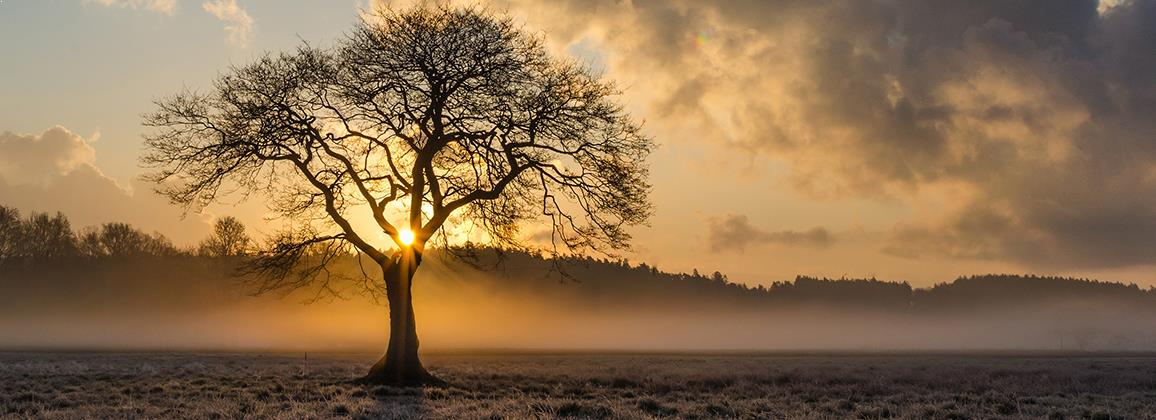 Sun rising behind a tree in an empty field, representing positive change from seeing a psychologist