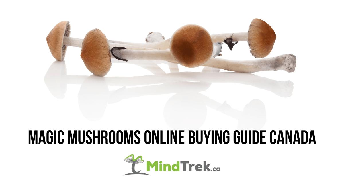 Magic Mushrooms Online