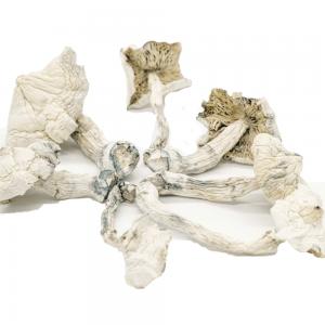 Albino Cambodians Magic Mushrooms