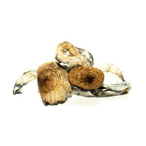 Koh Samui Magic Mushrooms