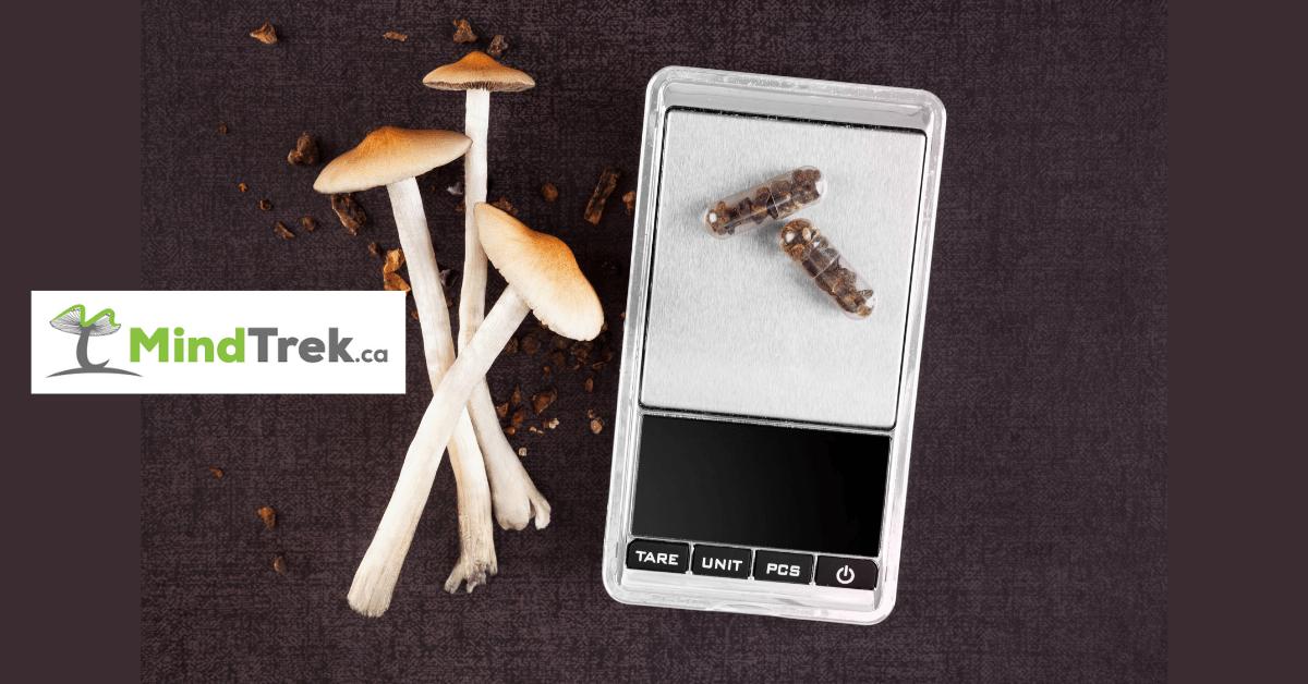 Microdosing Mushrooms