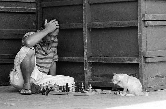 Человек играет в шахматы с кошкой