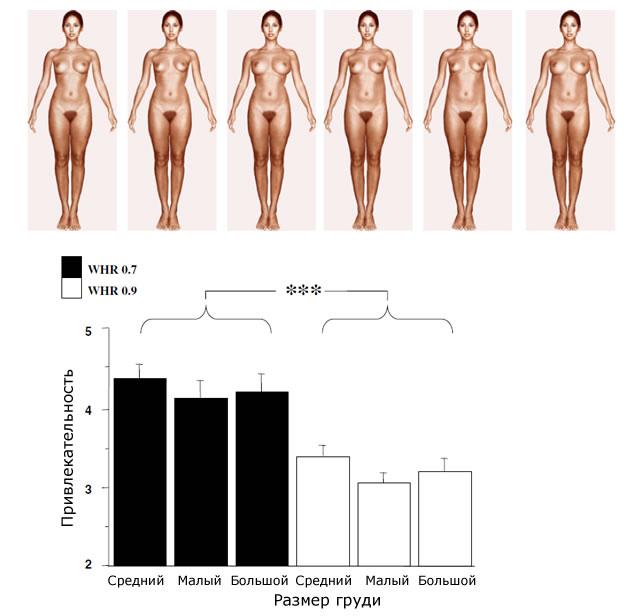 Привлекательность в зависимости от размера груди и WHR