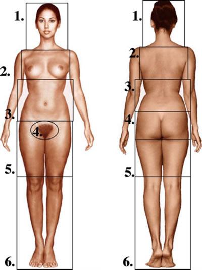 модель женщины из учебника по анатомии