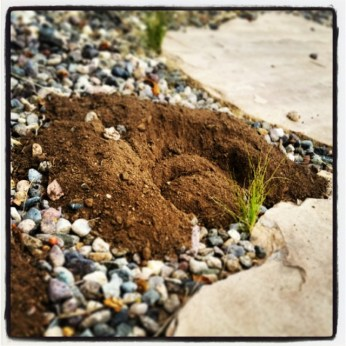 Why thank you gopher! I love redoing flagstone! I didn't get you anything. Or did I...