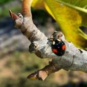 Strangest ladybug I ever saw.