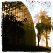 Mist through the morning sun at the Botanical Garden in Balboa Park.