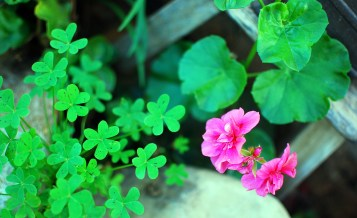 bright clover