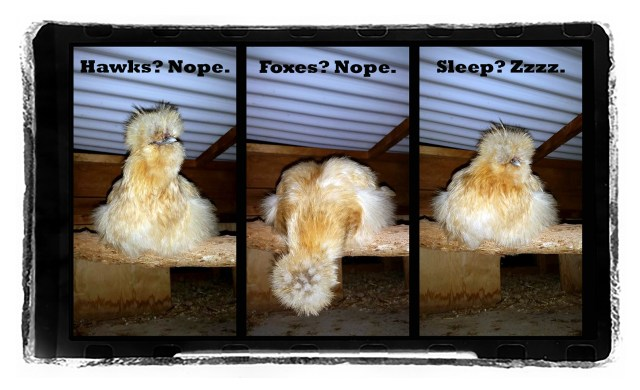 Piper Bedtime Routine