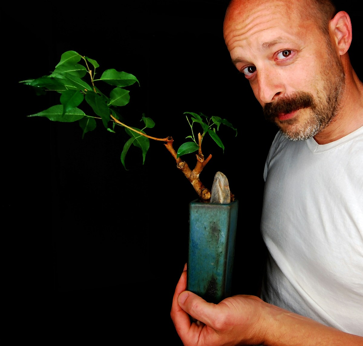 The Makings of a Ficus Bonsai
