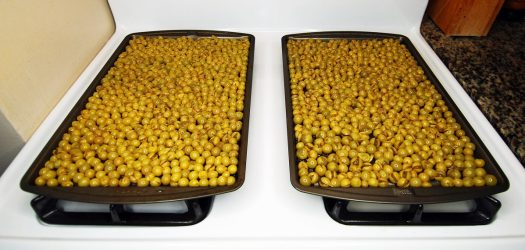 How to Make Organic Raisins 13_Niagara Grapes ready to go in the oven