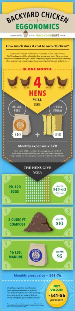 Backyard Chicken Eggonomics: How Much Does it Really Cost ...