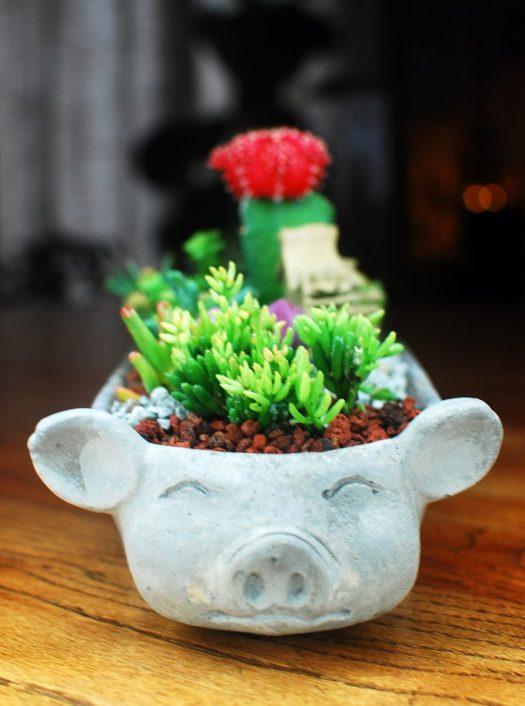 Little Pig Succulent Garden 02_Close Up of the Pig Face