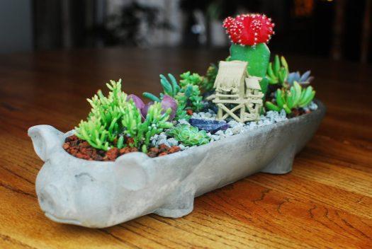 Little Pig Succulent Garden 05_Side view